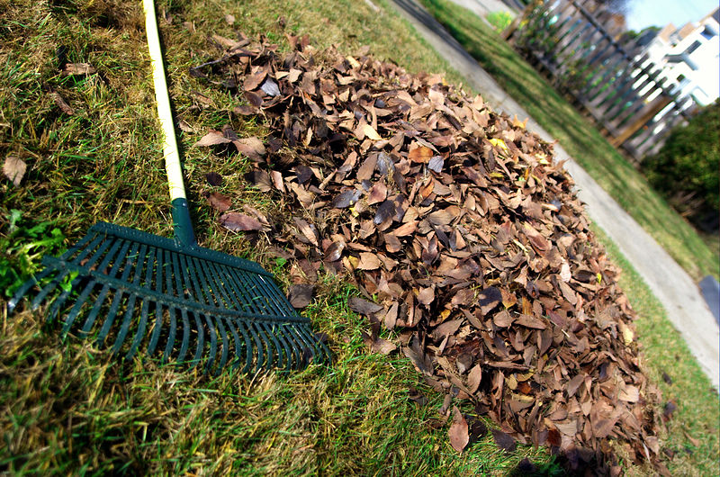 leave raking can lead to injuries
